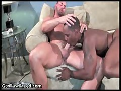 Tyler Reed And Kane Rider Gay Ass Fucking 3 By GetRawBreed