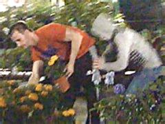 Community Garden Mayhem